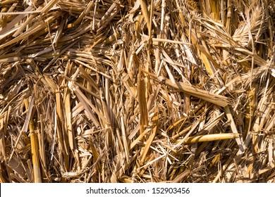 straw bale texture closeup