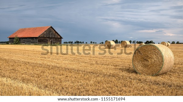 Straw bales on the harvested cornfield in front of old wooden barn. In the sky, a thunderstorm approaches from the west