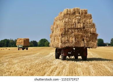 Straw bales on trailers in a field of North Rhine-Westphalia, Germany