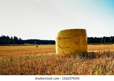 Straw bales wrapped on yellow plastic wrap on the fields of the rural Finland. The autumn is coming and the farmers are starting with harvesting.