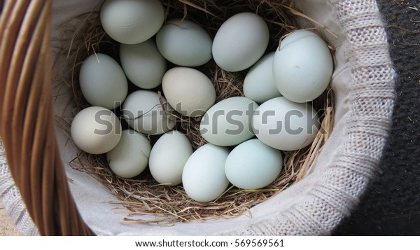 Straw basket full of pastel colored fresh eggs
