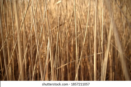 Straw blades irradiated by the sun's rays