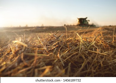 Straw and combine harvester on a harvested wheat field