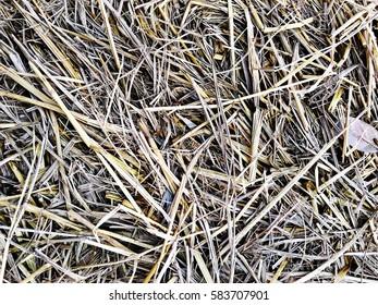 straw, dry straw, straw background texture.