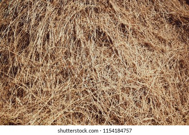 straw, dry straw texture background, vintage style for design.