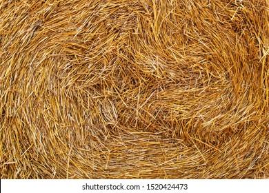 straw, dry straw texture background, vintage style for design. round pattern