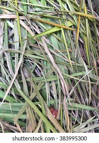 straw grass background