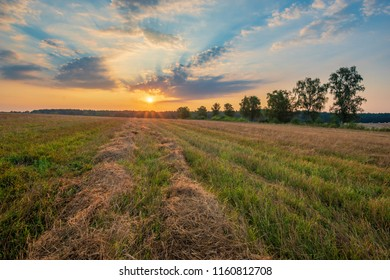 straw  on the field after harvest, sunrise