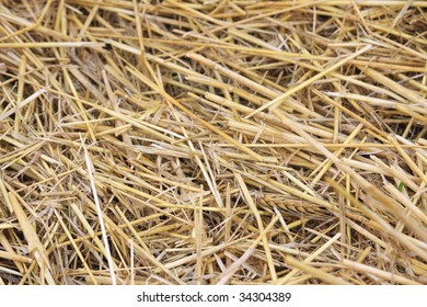 straw on stubble field after harvest