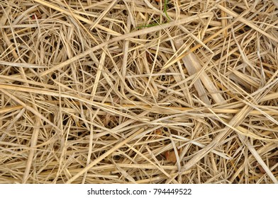 straw the rest of the harvest.
