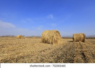straw roll in the fields