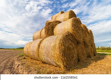 A straw rollers is stored on a treated field in a large pyramid. Agriculture, fodder. Sunny summer day
