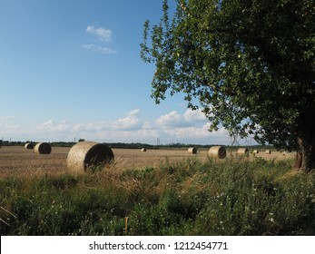 Straw in sheaves of summer in the field, mown grain. Agriculture meadow. Farm landscape photo