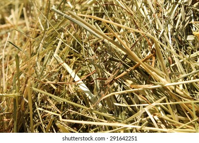 Straw in Summer