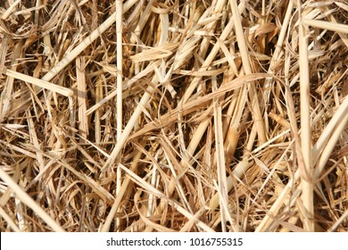 Straw textured surface for backgrounds and backdrops