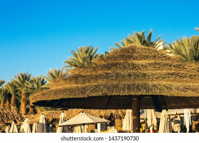 straw umbrella beach object and palm tree background of south tropic scenery landscape in some vacation destination place