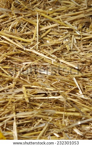 Straw wheat closeup