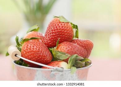 Strawberries in the Bucket