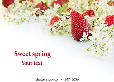 Strawberries with flowers of bird cherry on a white background. Sunny spring background. Isolated. Border with the copy space. Frame with strawberry background.