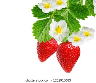 strawberries fresh red on white