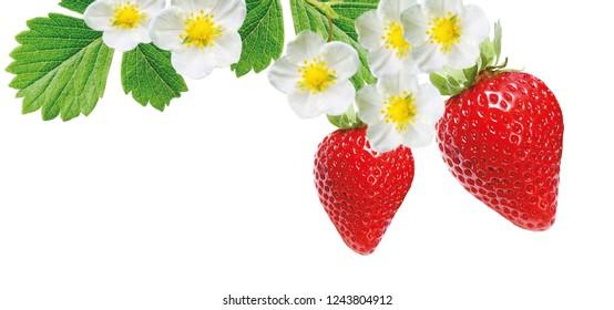 strawberries freshness ripe