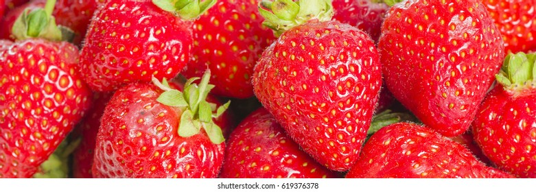 Strawberries - Hand picked strawberries. Delicious summer treat!