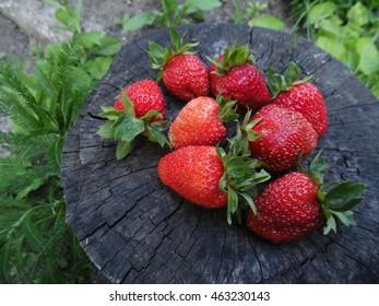 Strawberries on the stump