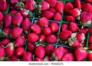 Strawberries for sale at a local farmers market in St. Pete Beach, Florida
