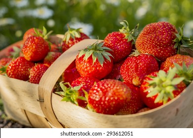 Strawberry in the basket background. Image with selective focus