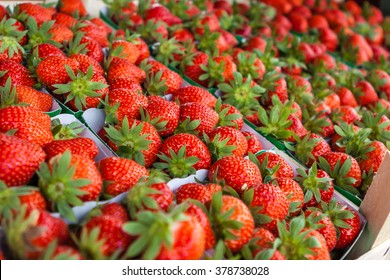Strawberry in Belgium