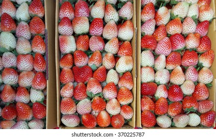 Strawberry in box for sale