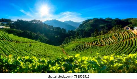 asian landscape images stock photos vectors shutterstock