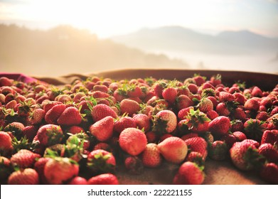 Strawberry in fog