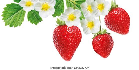 strawberry freshness tasty