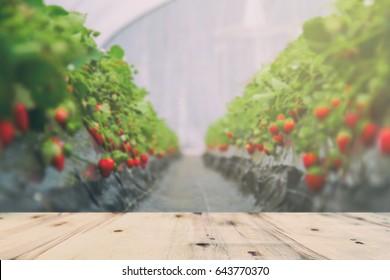 strawberry garden blur and wooden platform