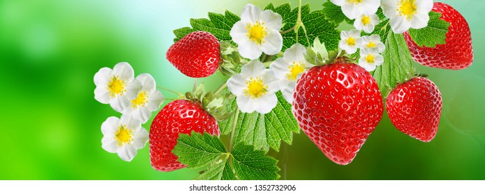 strawberry garden tasty