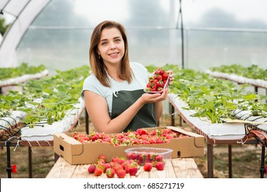 Strawberry growers engineer working in  greenhouse with harvest, woman  with box of berries