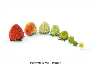 Strawberry growth isolated on white - evolution concept