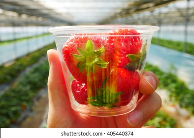 Strawberry from Korean strawberry field, South Korea. / 1 April 2016