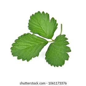 strawberry leaf isolated on white background