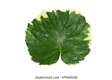 strawberry leaf isolated on white