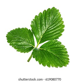 strawberry leaf isolated on the white