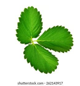Strawberry leaf on white background