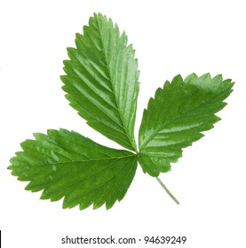 Strawberry leaf on a white background.