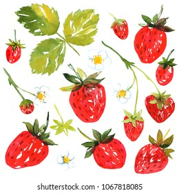 Strawberry with leaves and flowers. Berries painted with watercolor on white background. Sketch style illustration