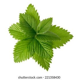 strawberry leaves isolated on the white background.