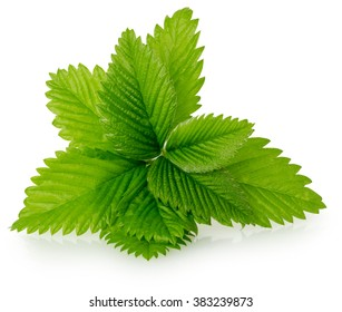 strawberry leaves isolated on the white background