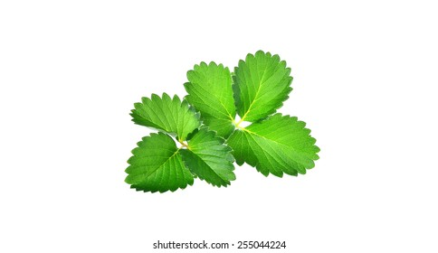 Strawberry leaves on white background