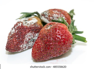 Strawberry with mold