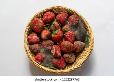 Strawberry moldy In the basket